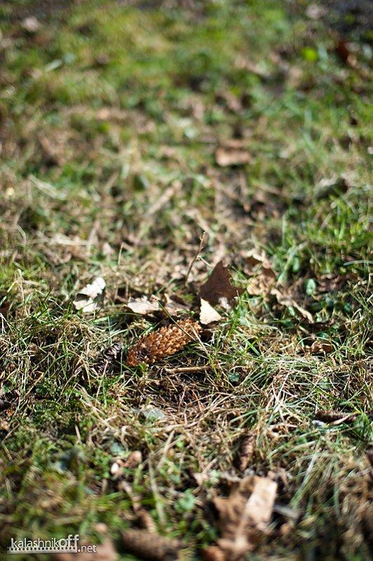 IMAGE: http://www.kalashnikoff.net/public/50mm_af/medium/071_sigma_f1.4-071.jpg